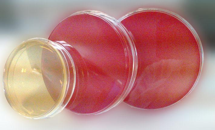 1/2 MS培养基粉剂(含蔗糖和琼脂)