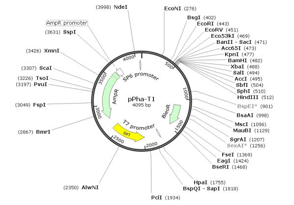 pPha-T1质粒